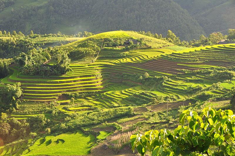 File:Terraced fields Sa Pa Vietnam.JPG