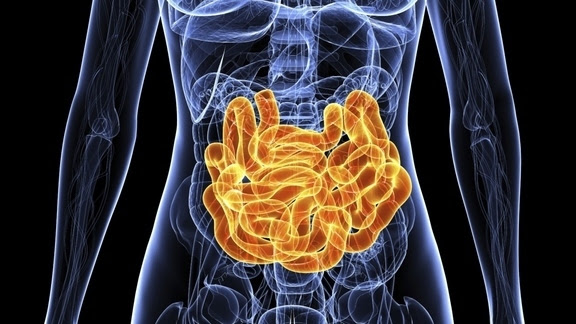 http://cdn.arstechnica.net/wp-content/uploads/2011/10/intestines-4e985f0-intro.jpg