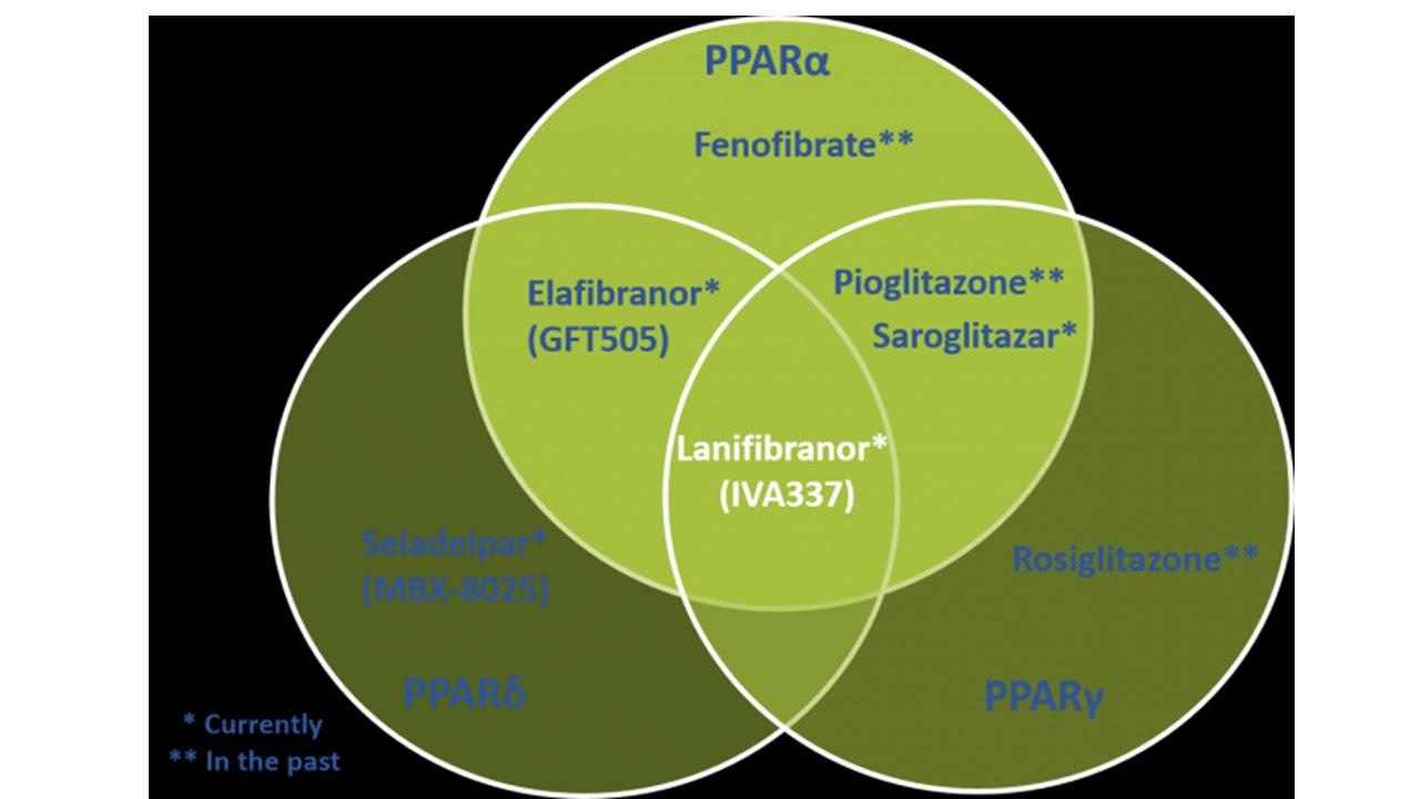 PPAR_family_overview.jpg