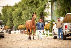 A veterinarian prepares to examine a horse at Santa Anita Park