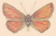 mariposa010