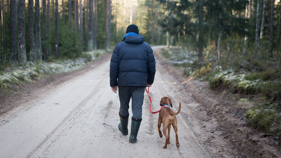 Photo of man walking dog on a lead, along a track through woodlands.