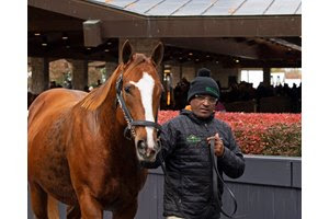 Take Charge Brandi enters the ring at the Keeneland November Sale
