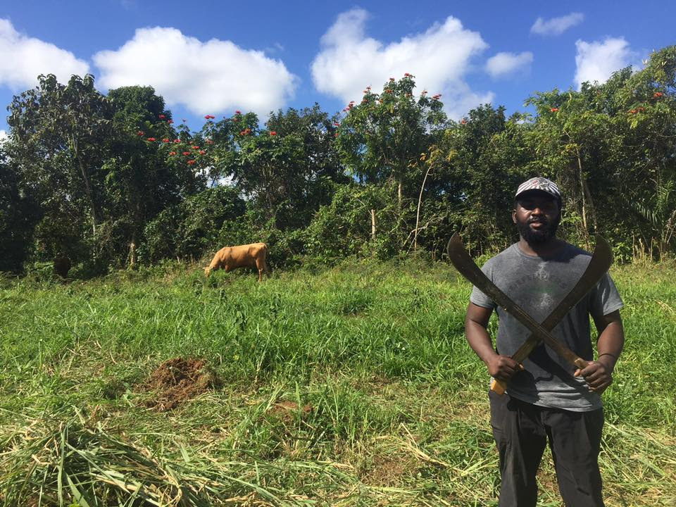 black owned farms