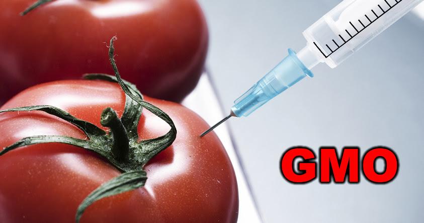 Estamos envenenándonos: Cómo reconocer los tomates GMO en dos fáciles pasos