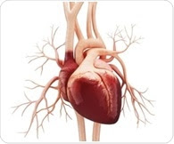 Discovery of molecular nets may lead to new treatment approach for heart failure