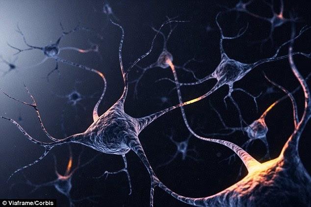 26821f8900000578 2988319 image <a href= - Implantan recuerdos en ratones mientras duermen