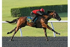 The Quality Road colt consigned as Hip 1236 works a quarter-mile in :20 4/5 during the OBS under tack show