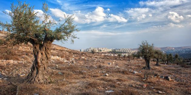 Día de la Tierra Palestina: ¿Pero de qué tierra estamos hablando?