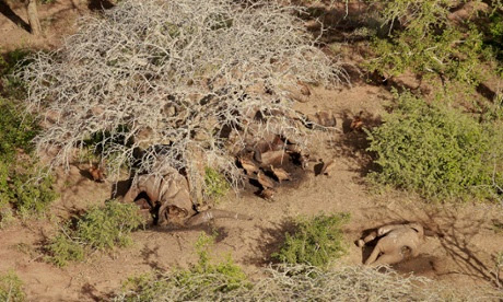 Elephants killed by poachers in Tvaso East National Park