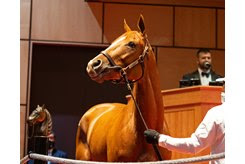 Got Stormy in the ring at The November Sale in 2020