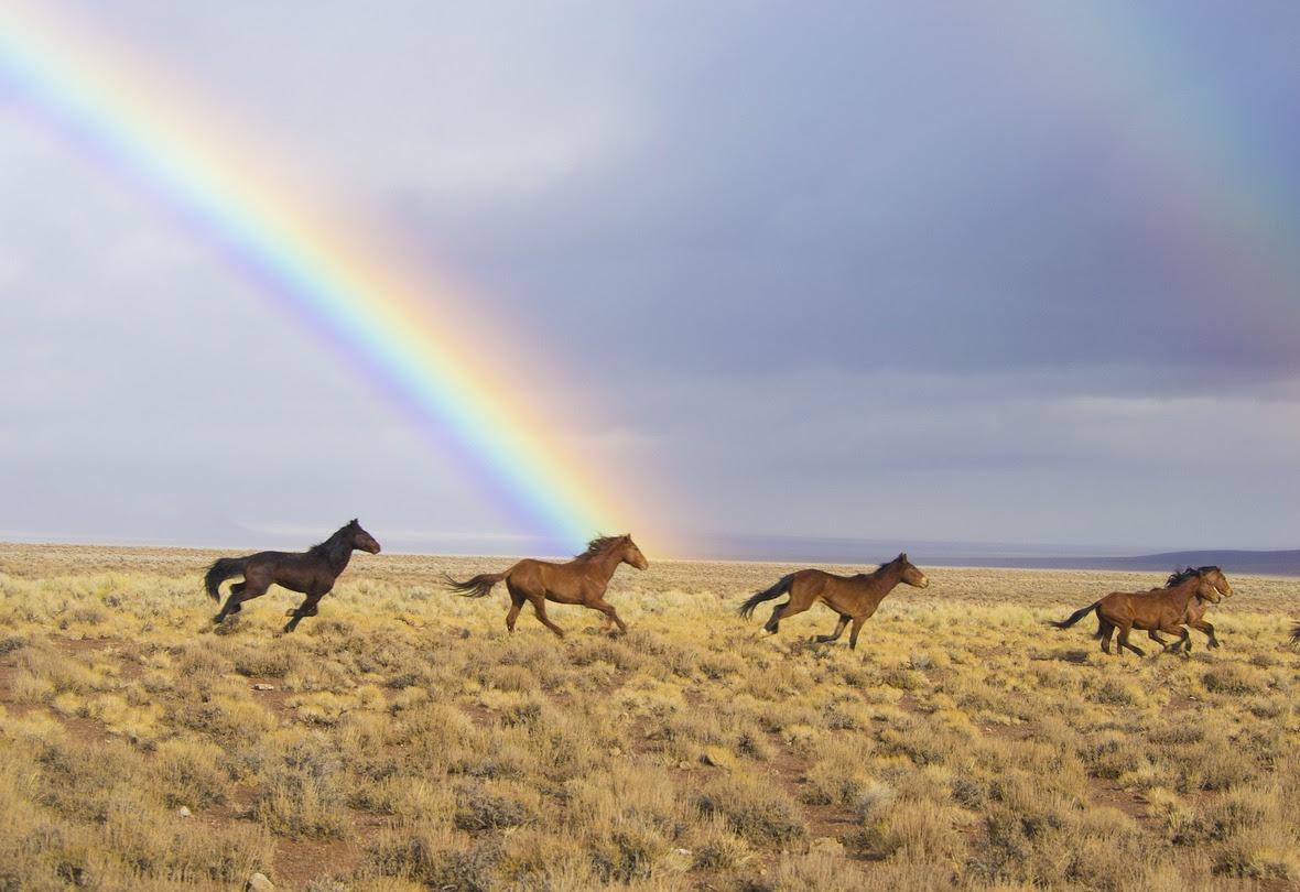 wild-horsesRainbowPix