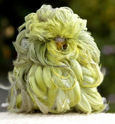A mutant parakeet with long curly feathers.  If you don't believe this one is real, check out the video at the end.