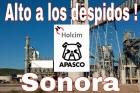 LafargeHolcim увольняет рабочих в Мексике за членство в независимом профсоюзе
