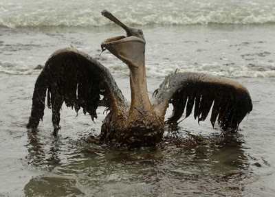 Results of Horizon oil spill in Gulf of Mexico, 2011.
