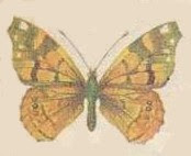 mariposa006