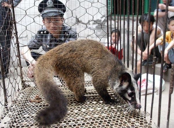 An Asian palm civet in Wuhan in 2003. SARS was ultimately traced to a coronavirus that jumped from bats to civets, which are prized as a delicacy in southern China.