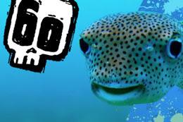 Steve Backshall's Fearsome Fish Quiz