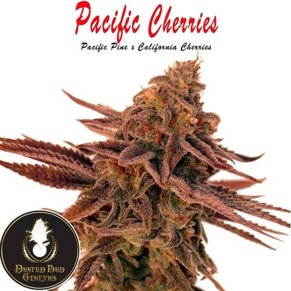 PACIFIC CHERRIES