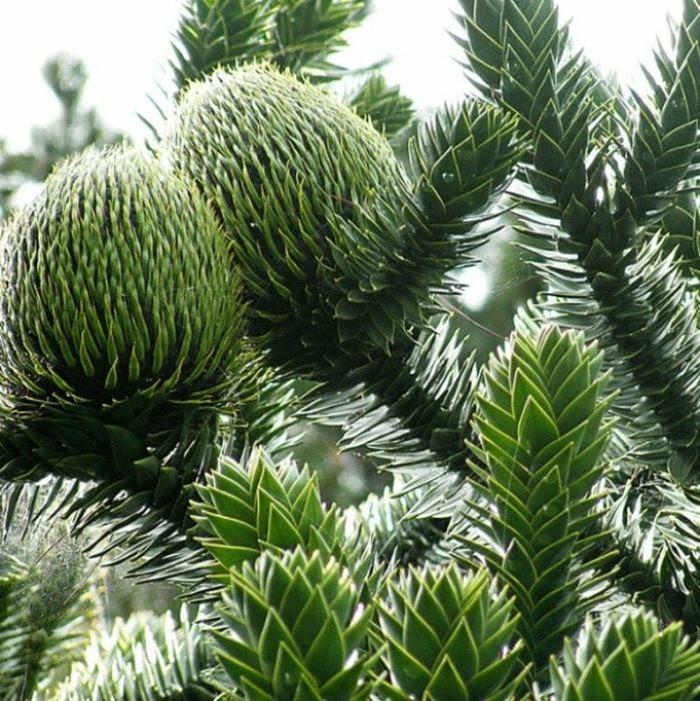 20 самых странных деревьев в мире, которые доказывают, что природа круче любых спецэффектов!