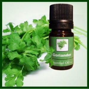 corriander oil3WS