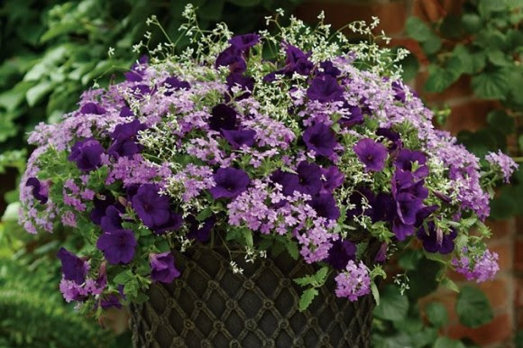 Purple flower container planting