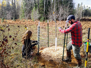 Man and woman put up fence around newly planted tree