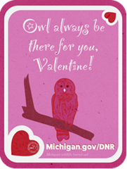 """A pink valentine with an owl with the text """"Owl always be there for you, valentine!"""""""