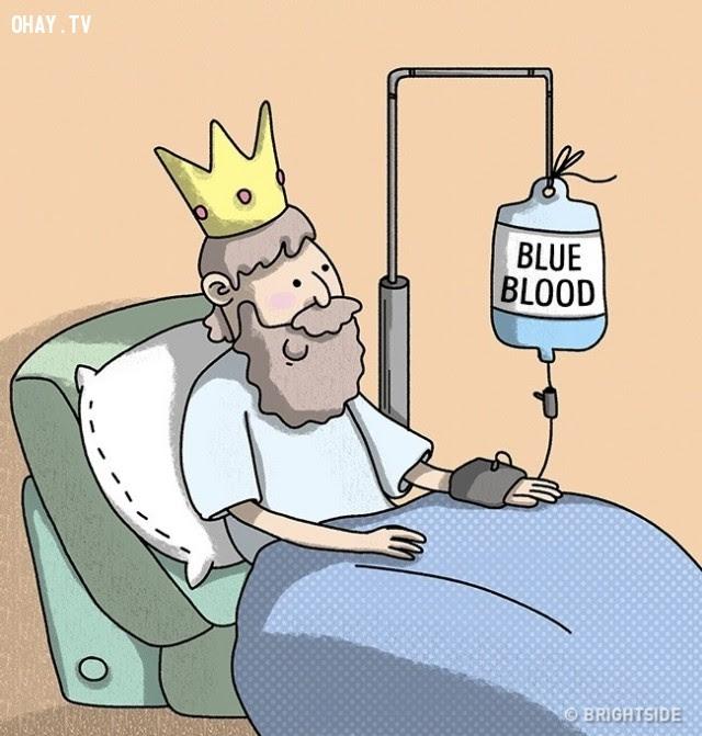 Lầm tưởng #2: Máu đã khử oxy có màu xanh,nhận thức sai lầm,cơ thể con người,lầm tưởng