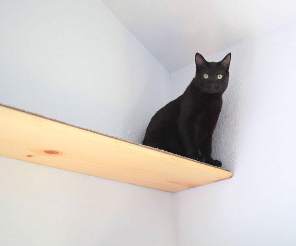 Cat Sitting on floating shelf