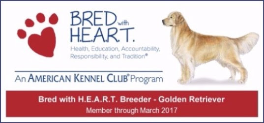 Wisteria Goldens is a Member of Dog Breeders Bred With HEART AKC Bred with H.E.A.R.T. Program Wisteria Goldens have consistently been committed to being in good standing with the AKC and other authorities in all areas of our business. But, our primary dedication is to raise happy and healthy English Cream Golden Retrievers. We love our families! We love our dogs! We love our remarkable team!