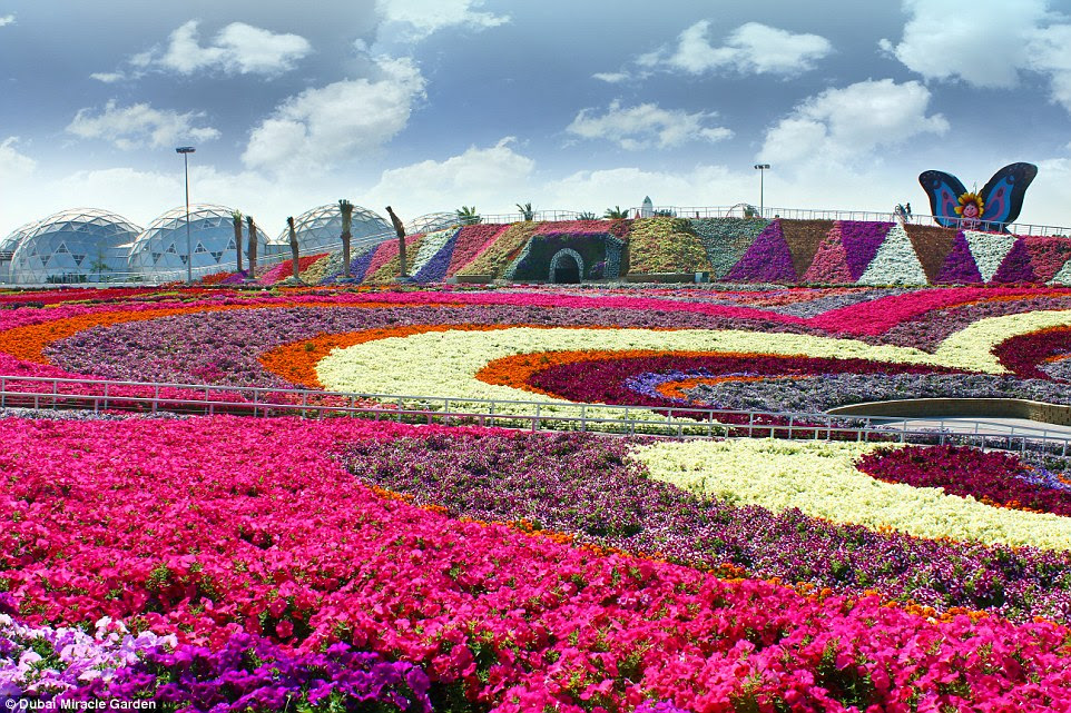 At the                                                            moment, there are 45 species                                                            of flowers in the garden,                                                            which are imported in                                                            from all around the                                                            world