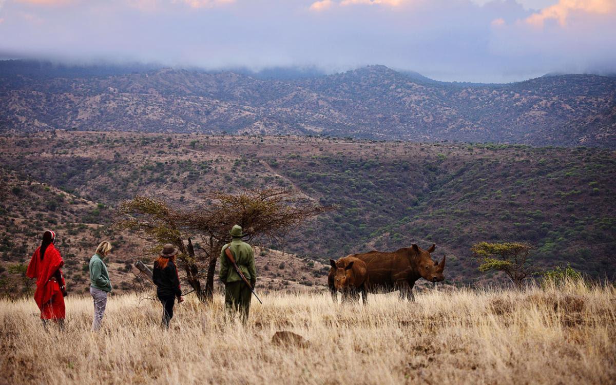 Lewa-Safari-Camp-Bush-Walk-Rhino.jpg