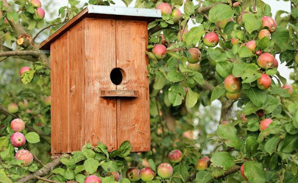 Image of a wooden birdhouse in an apple tree