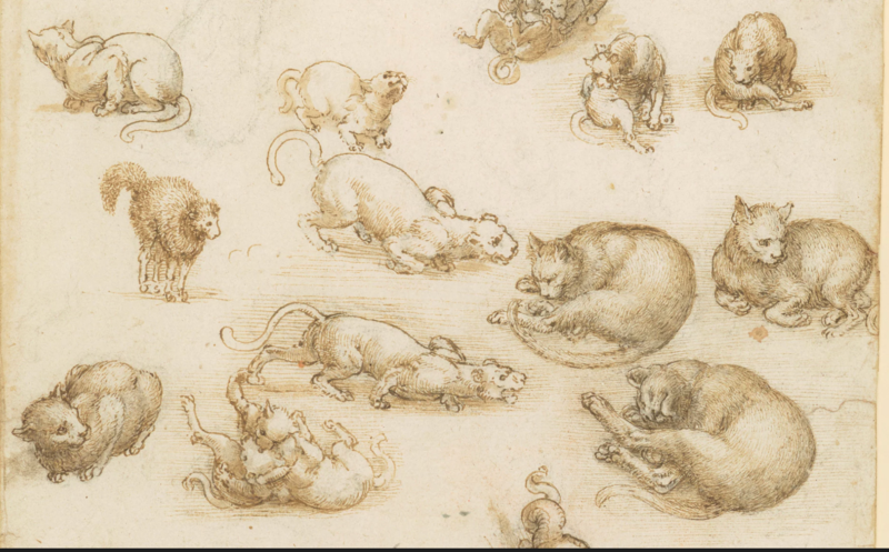 Leonardo journal page
