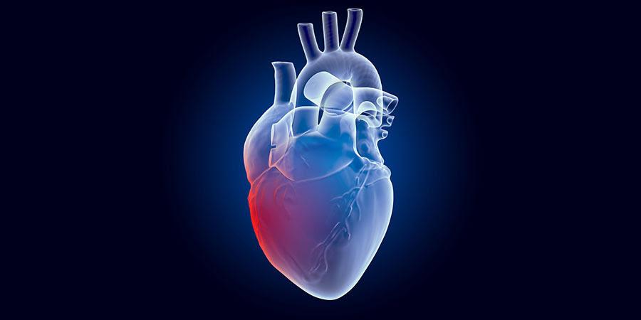 Una foto de un dibujo del corazón humano