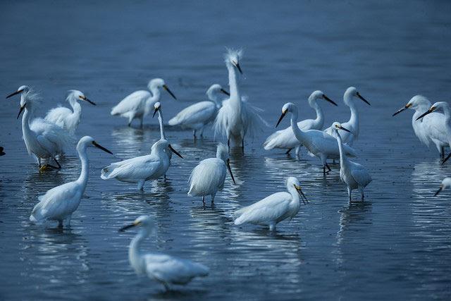 Quivira National                 Wildlife Refuge, Stafford County, Kansas