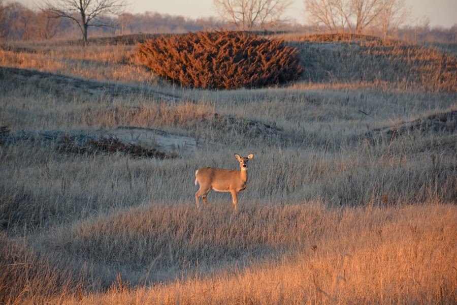 This year enhanced CWD suveillance efforts are occuring throughout 18 counties in northern Wisconsin. -  - Photo credit: Anthony Petrie