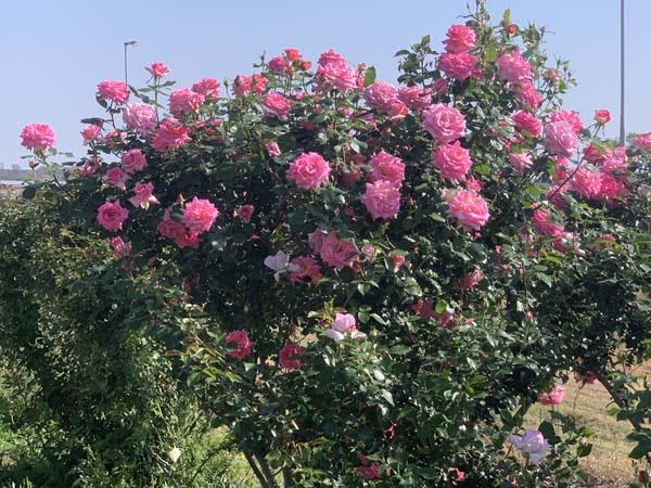 E Isidingo pruned 24Sep.jpg