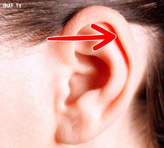 Phần tai gập -điểm Darwin,cơ thể con người,sự tiến hóa