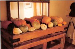 My pumpkin display photographed by Joy Larkcom in 1991
