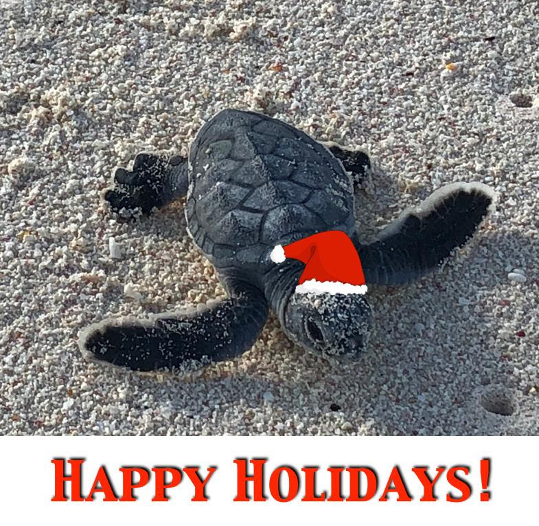 Happy Holidays Baby turtle