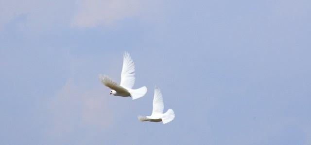 flight_of_doves