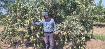 Nuevas tecnologías y la gestión eficiente del agua y fertilización son claves para hacer más competitiva la industria del mango
