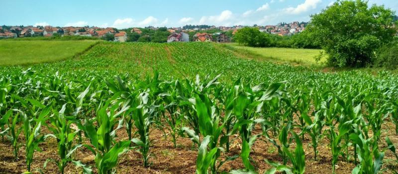 Farm Scoop - February 2019 - Cooperative Extension