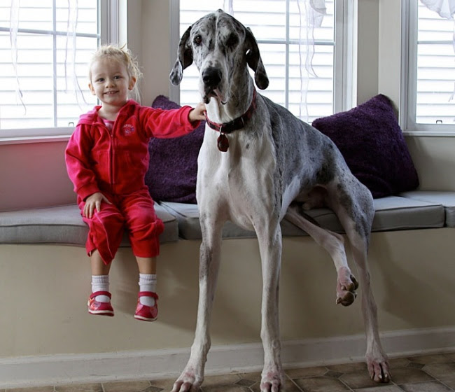 http://s.fishki.net/upload/post/201412/02/1339454/7172610-r3l8t8d-650-cute-big-dogs-and-babies-21.jpg