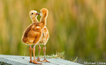 photo by Michael Libbe via Birdshare
