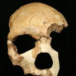 Three New Discoveries in a Month Rock Our African Origins