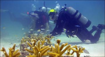 Habitat month diver