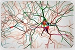 Waste-disposal system of cell appears to play key role in spread of Alzheimer's disease
